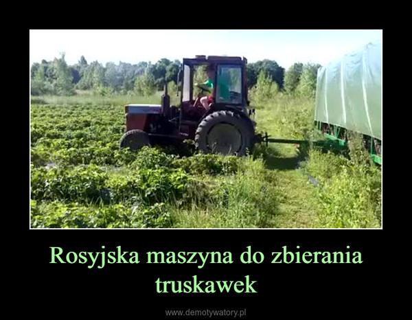 Rosyjska maszyna do zbierania truskawek –