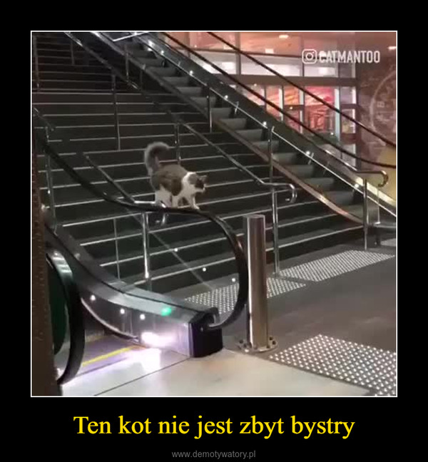 Ten kot nie jest zbyt bystry –