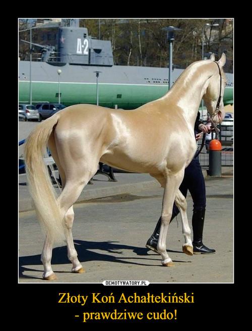 Złoty Koń Achałtekiński - prawdziwe cudo!