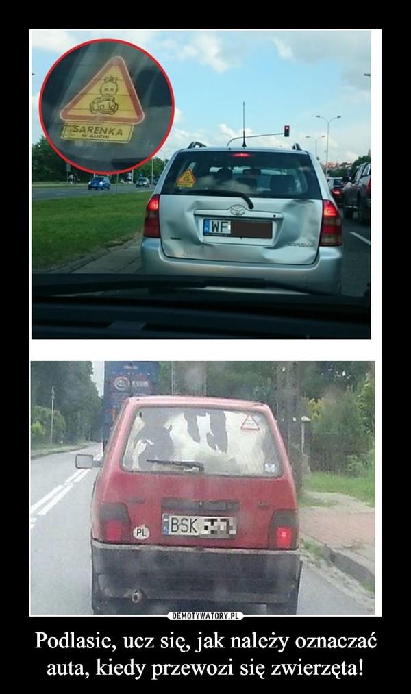 Podlasie, ucz się, jak należy oznaczać auta, kiedy przewozi się zwierzęta! –