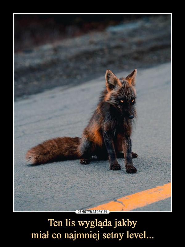 Ten lis wygląda jakbymiał co najmniej setny level... –