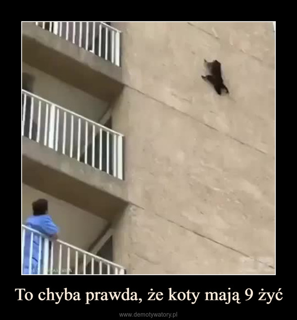 To chyba prawda, że koty mają 9 żyć –