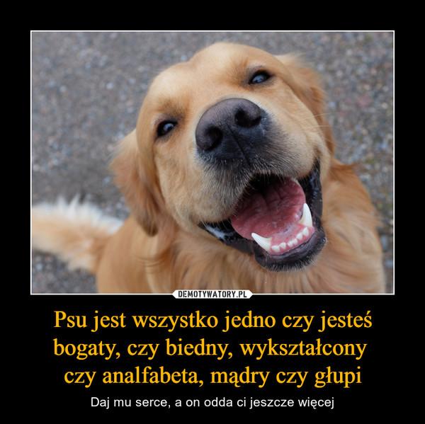 Psu jest wszystko jedno czy jesteś bogaty, czy biedny, wykształcony czy analfabeta, mądry czy głupi – Daj mu serce, a on odda ci jeszcze więcej
