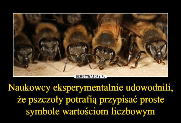 Naukowcy eksperymentalnie udowodnili, że pszczoły potrafią przypisać proste symbole wartościom liczbowym –