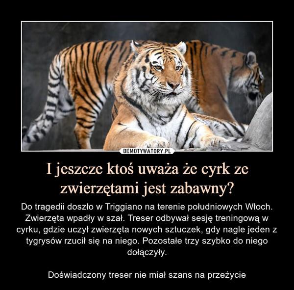 I jeszcze ktoś uważa że cyrk ze zwierzętami jest zabawny? – Do tragedii doszło w Triggiano na terenie południowych Włoch. Zwierzęta wpadły w szał. Treser odbywał sesję treningową w cyrku, gdzie uczył zwierzęta nowych sztuczek, gdy nagle jeden z tygrysów rzucił się na niego. Pozostałe trzy szybko do niego dołączyły.Doświadczony treser nie miał szans na przeżycie