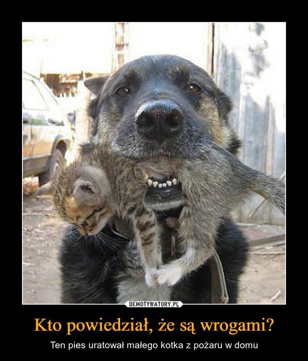 Kto powiedział, że są wrogami? – Ten pies uratował małego kotka z pożaru w domu