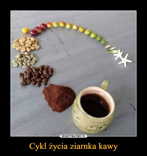 Cykl życia ziarnka kawy –