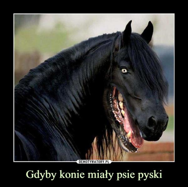 Gdyby konie miały psie pyski –