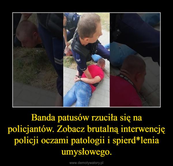 Banda patusów rzuciła się na policjantów. Zobacz brutalną interwencję policji oczami patologii i spierd*lenia umysłowego. –