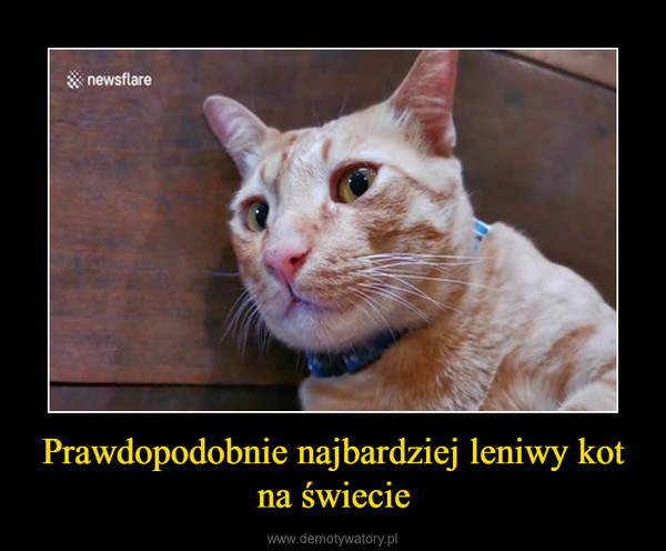 Prawdopodobnie najbardziej leniwy kot na świecie –