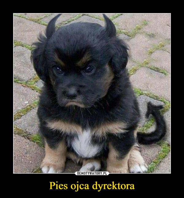 Pies ojca dyrektora –
