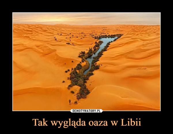 Tak wygląda oaza w Libii –