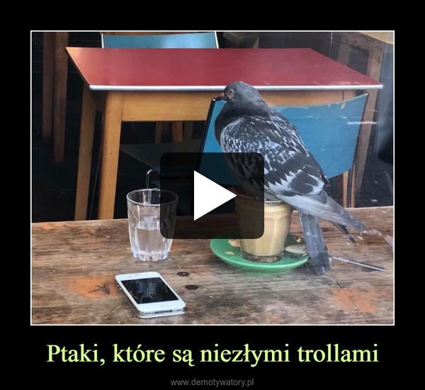 Ptaki, które są niezłymi trollami –