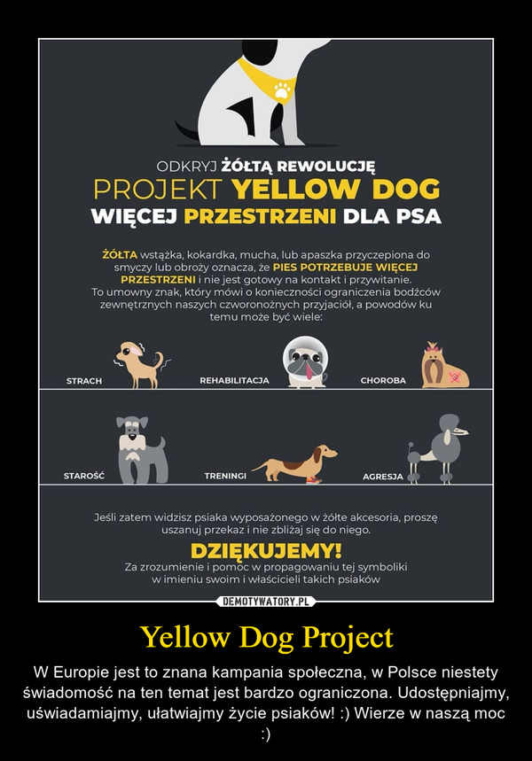 Yellow Dog Project – W Europie jest to znana kampania społeczna, w Polsce niestety świadomość na ten temat jest bardzo ograniczona. Udostępniajmy, uświadamiajmy, ułatwiajmy życie psiaków! :) Wierze w naszą moc :)