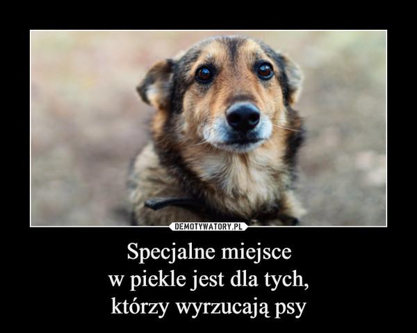 Specjalne miejscew piekle jest dla tych,którzy wyrzucają psy –