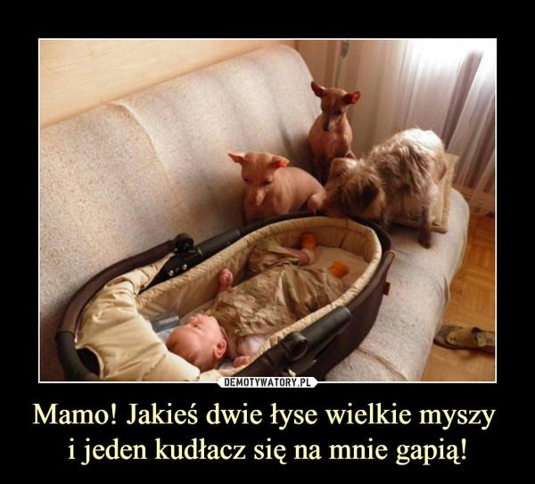 Mamo! Jakieś dwie łyse wielkie myszy i jeden kudłacz się na mnie gapią! –