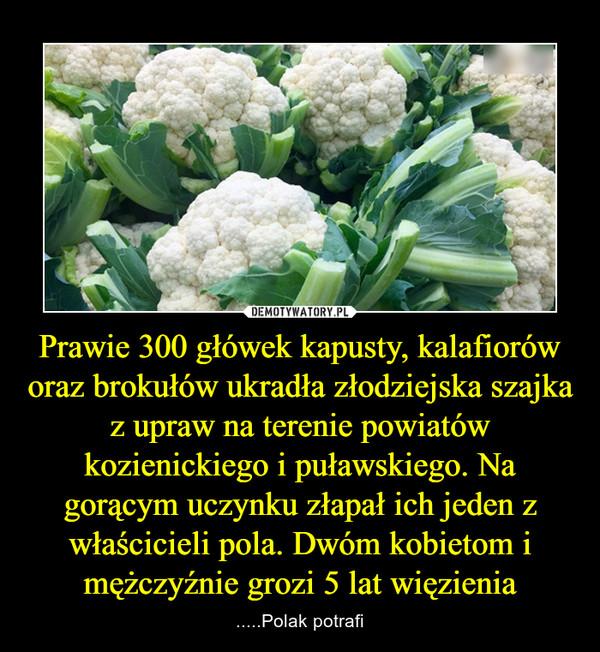 Prawie 300 główek kapusty, kalafiorów oraz brokułów ukradła złodziejska szajka z upraw na terenie powiatów kozienickiego i puławskiego. Na gorącym uczynku złapał ich jeden z właścicieli pola. Dwóm kobietom i mężczyźnie grozi 5 lat więzienia – .....Polak potrafi