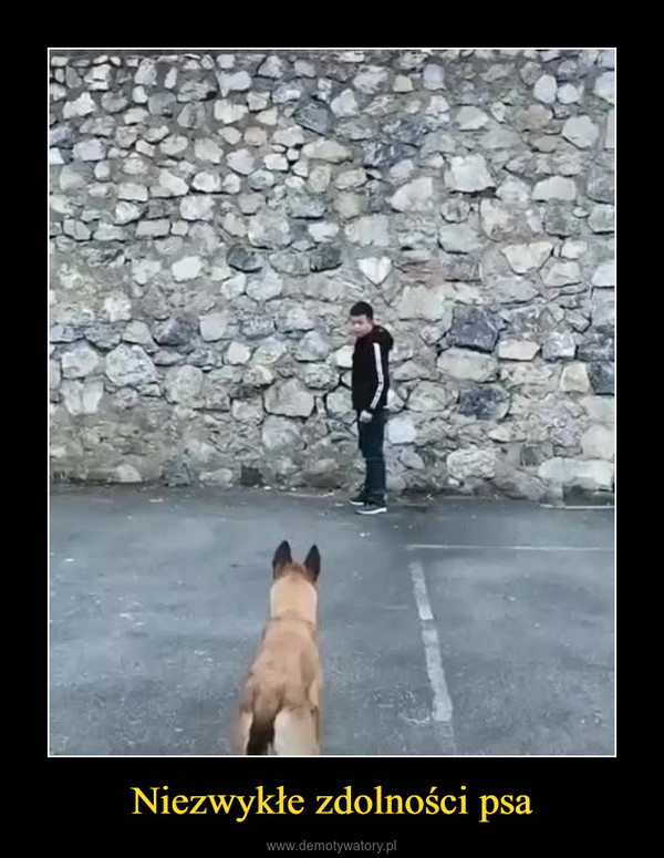 Niezwykłe zdolności psa –