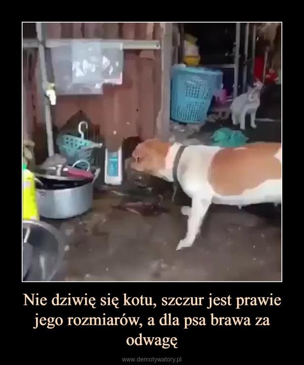 Nie dziwię się kotu, szczur jest prawie jego rozmiarów, a dla psa brawa za odwagę –