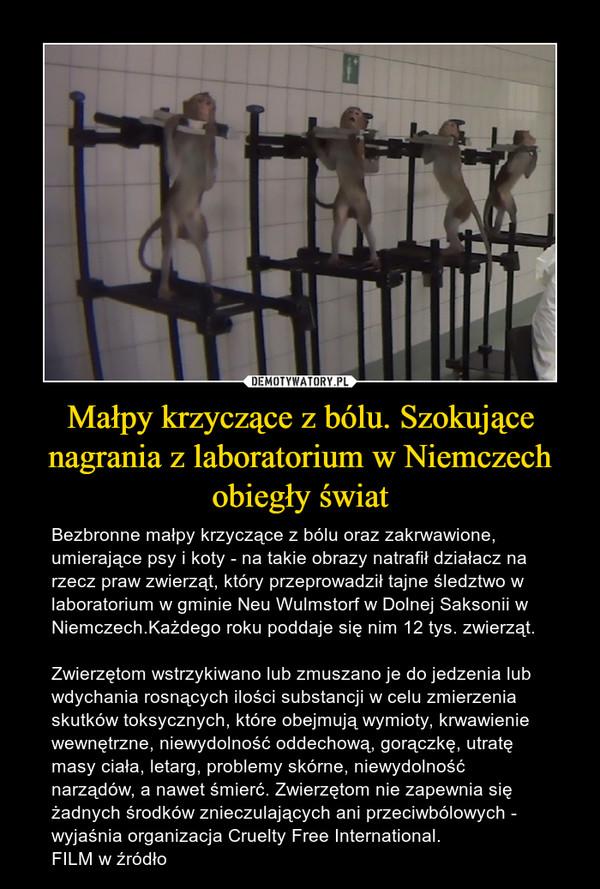 Małpy krzyczące z bólu. Szokujące nagrania z laboratorium w Niemczech obiegły świat – Bezbronne małpy krzyczące z bólu oraz zakrwawione, umierające psy i koty - na takie obrazy natrafił działacz na rzecz praw zwierząt, który przeprowadził tajne śledztwo w laboratorium w gminie Neu Wulmstorf w Dolnej Saksonii w Niemczech.Każdego roku poddaje się nim 12 tys. zwierząt.Zwierzętom wstrzykiwano lub zmuszano je do jedzenia lub wdychania rosnących ilości substancji w celu zmierzenia skutków toksycznych, które obejmują wymioty, krwawienie wewnętrzne, niewydolność oddechową, gorączkę, utratę masy ciała, letarg, problemy skórne, niewydolność narządów, a nawet śmierć. Zwierzętom nie zapewnia się żadnych środków znieczulających ani przeciwbólowych - wyjaśnia organizacja Cruelty Free International.FILM w źródło