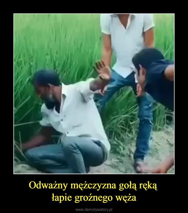 Odważny mężczyzna gołą ręką łapie groźnego węża –