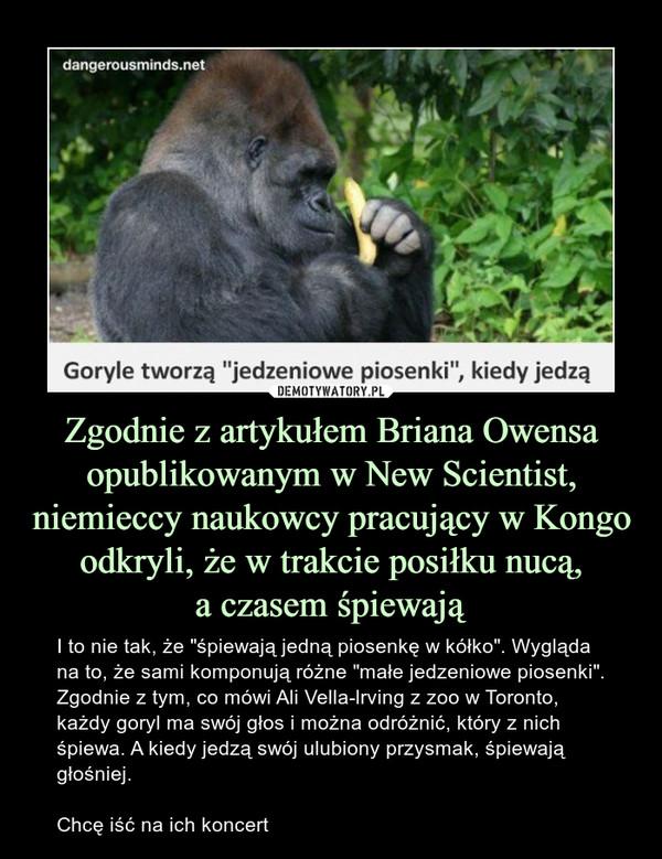 """Zgodnie z artykułem Briana Owensa opublikowanym w New Scientist, niemieccy naukowcy pracujący w Kongo odkryli, że w trakcie posiłku nucą,a czasem śpiewają – I to nie tak, że """"śpiewają jedną piosenkę w kółko"""". Wygląda na to, że sami komponują różne """"małe jedzeniowe piosenki"""".Zgodnie z tym, co mówi Ali Vella-lrving z zoo w Toronto, każdy goryl ma swój głos i można odróżnić, który z nich śpiewa. A kiedy jedzą swój ulubiony przysmak, śpiewają głośniej.Chcę iść na ich koncert Goryle tworzą """"jedzeniowe piosenki"""", kiedy jedzą"""