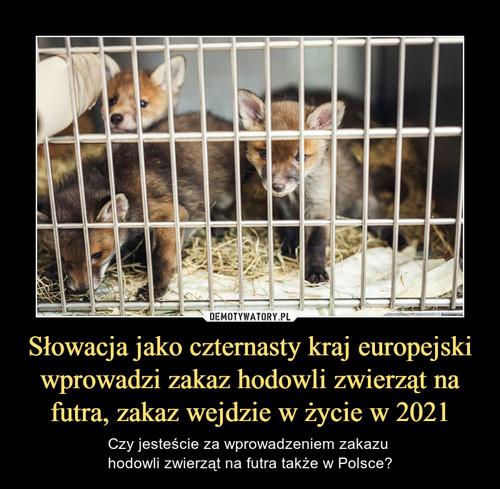 Słowacja jako czternasty kraj europejski wprowadzi zakaz hodowli zwierząt na futra, zakaz wejdzie w życie w 2021