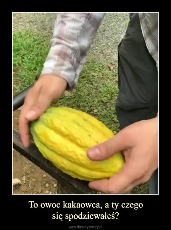 To owoc kakaowca, a ty czegosię spodziewałeś? –
