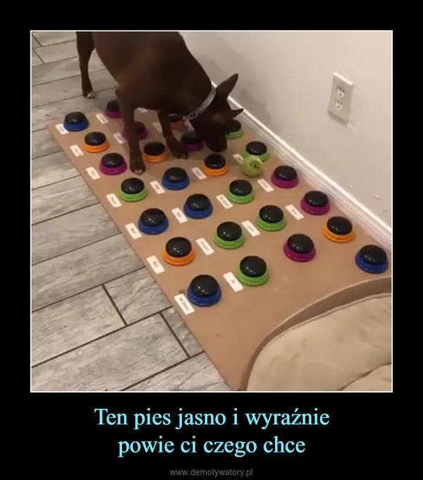 Ten pies jasno i wyraźniepowie ci czego chce –