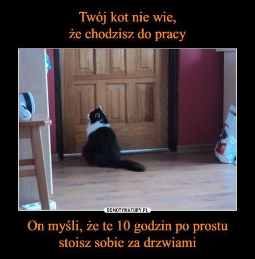 Twój kot nie wie, że chodzisz do pracy On myśli, że te 10 godzin po prostu stoisz sobie za drzwiami