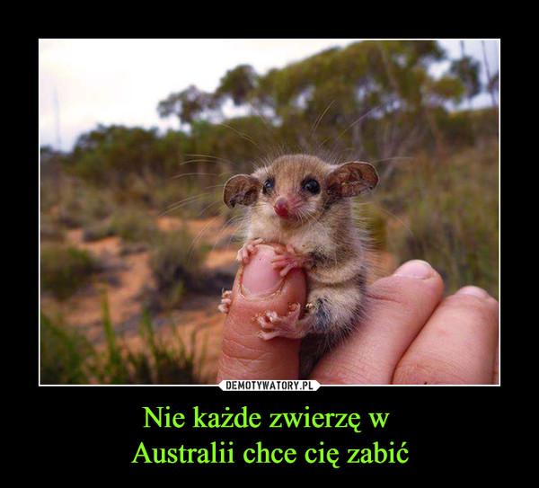 Nie każde zwierzę w Australii chce cię zabić –