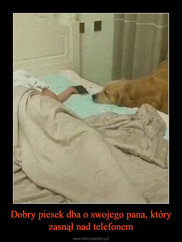 Dobry piesek dba o swojego pana, który zasnął nad telefonem –