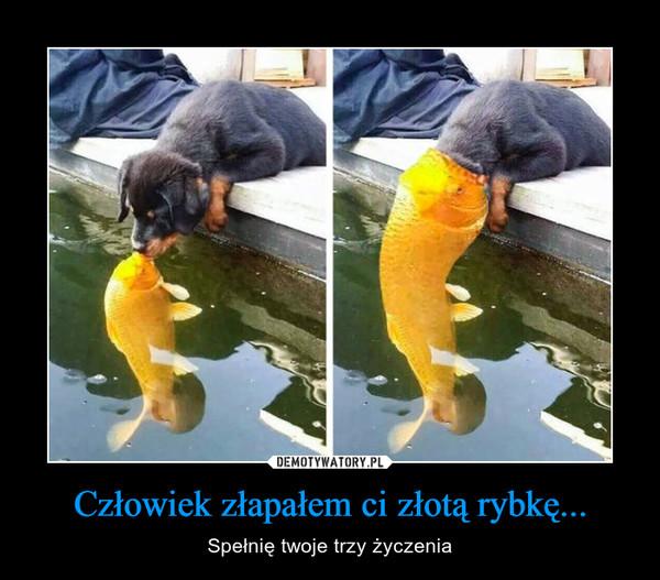 Człowiek złapałem ci złotą rybkę... – Spełnię twoje trzy życzenia