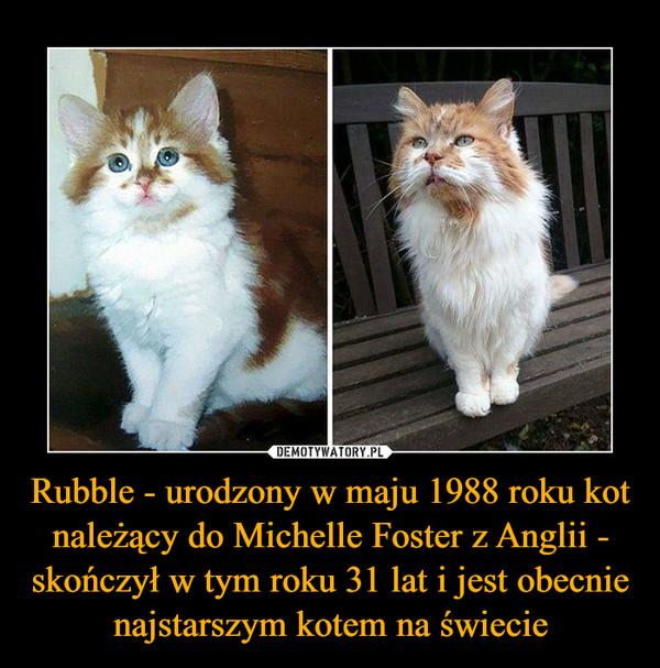 Rubble - urodzony w maju 1988 roku kot należący do Michelle Foster z Anglii - skończył w tym roku 31 lat i jest obecnie najstarszym kotem na świecie –