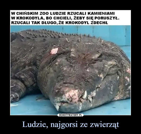 Ludzie, najgorsi ze zwierząt –  W CHIŃSKIM ZoO LUDZIE RZUCALI KAMIENIAMIW KROKODYLA, BO CHCIELI, ŻEBY SIĘ PORUSZYŁ.RZUCALI TAK DŁUGO, ŻE KROKODYL ZDECHŁDEMOTYWATORY.PLNajgorsze bydło na ziemi to ludzie