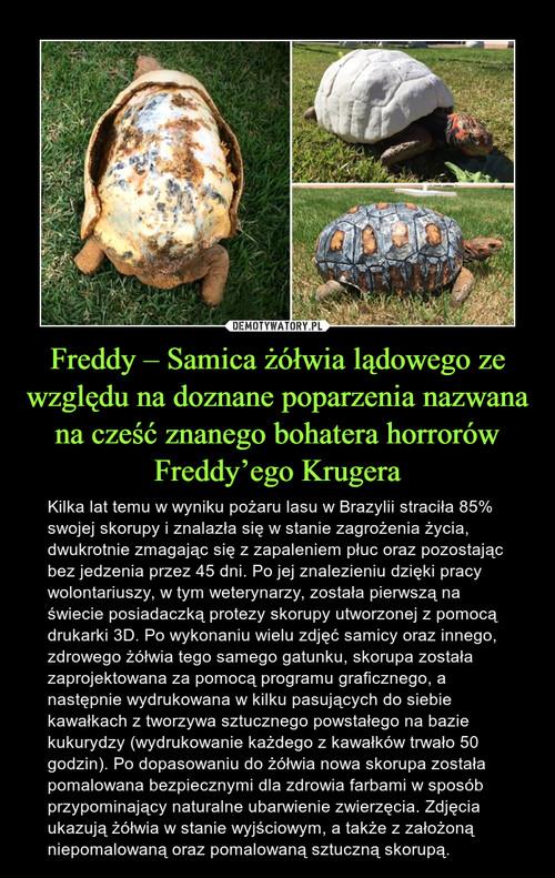 Freddy – Samica żółwia lądowego ze względu na doznane poparzenia nazwana na cześć znanego bohatera horrorów Freddy'ego Krugera