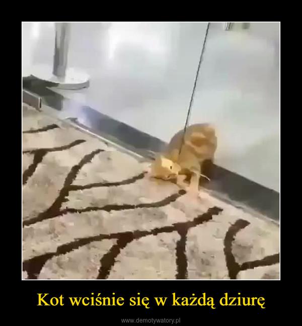 Kot wciśnie się w każdą dziurę –