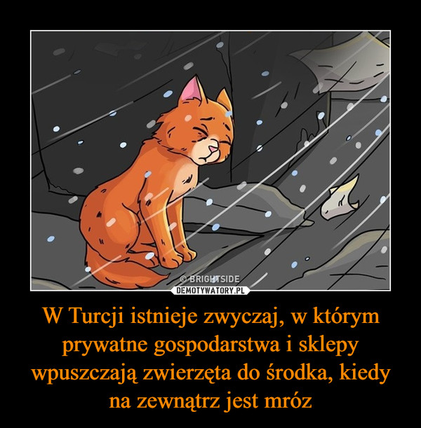 W Turcji istnieje zwyczaj, w którym prywatne gospodarstwa i sklepy wpuszczają zwierzęta do środka, kiedy na zewnątrz jest mróz –