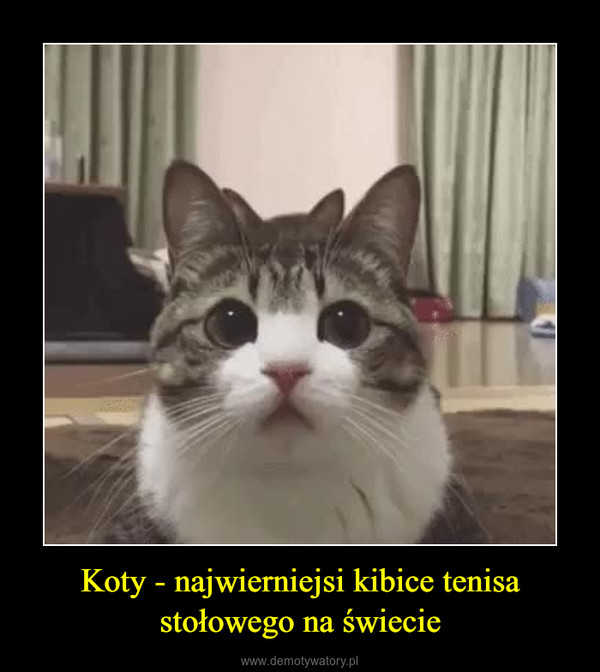 Koty - najwierniejsi kibice tenisa stołowego na świecie –