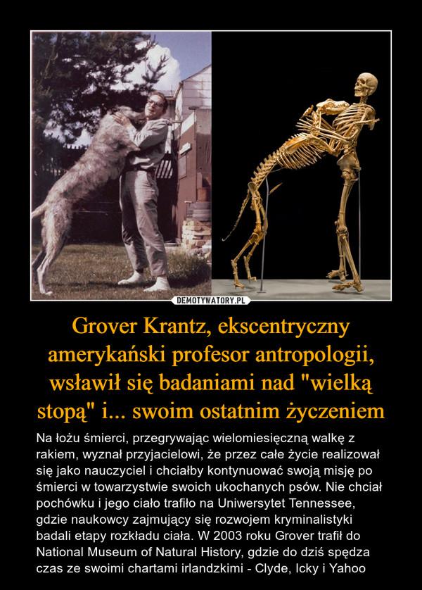 """Grover Krantz, ekscentryczny amerykański profesor antropologii, wsławił się badaniami nad """"wielką stopą"""" i... swoim ostatnim życzeniem – Na łożu śmierci, przegrywając wielomiesięczną walkę z rakiem, wyznał przyjacielowi, że przez całe życie realizował się jako nauczyciel i chciałby kontynuować swoją misję po śmierci w towarzystwie swoich ukochanych psów. Nie chciał pochówku i jego ciało trafiło na Uniwersytet Tennessee, gdzie naukowcy zajmujący się rozwojem kryminalistyki badali etapy rozkładu ciała. W 2003 roku Grover trafił do National Museum of Natural History, gdzie do dziś spędza czas ze swoimi chartami irlandzkimi - Clyde, Icky i Yahoo"""