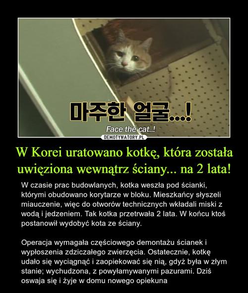W Korei uratowano kotkę, która została uwięziona wewnątrz ściany... na 2 lata!