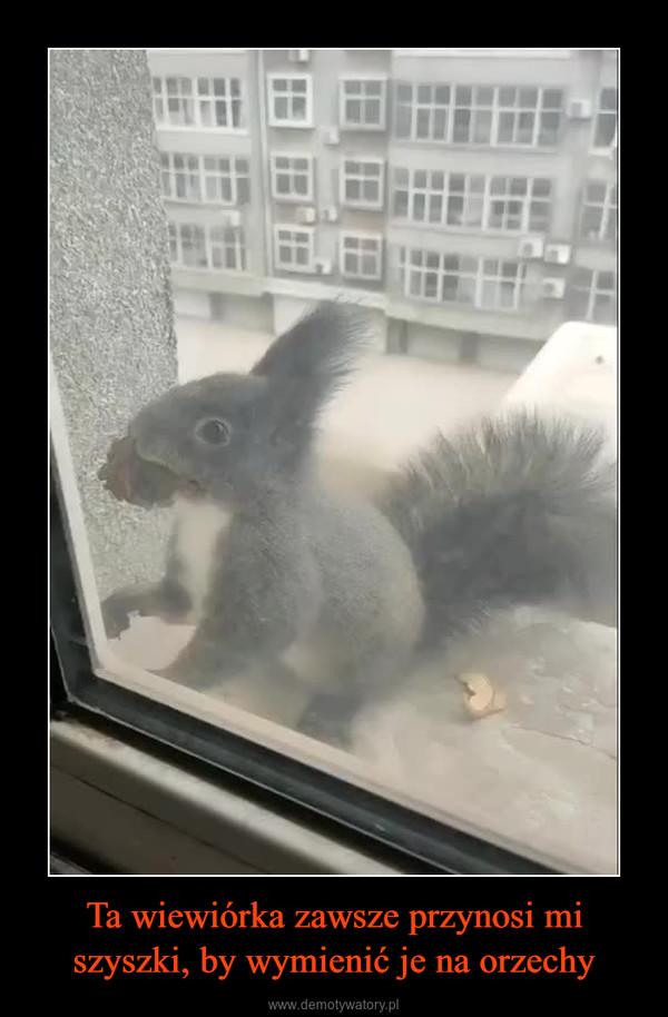Ta wiewiórka zawsze przynosi mi szyszki, by wymienić je na orzechy –