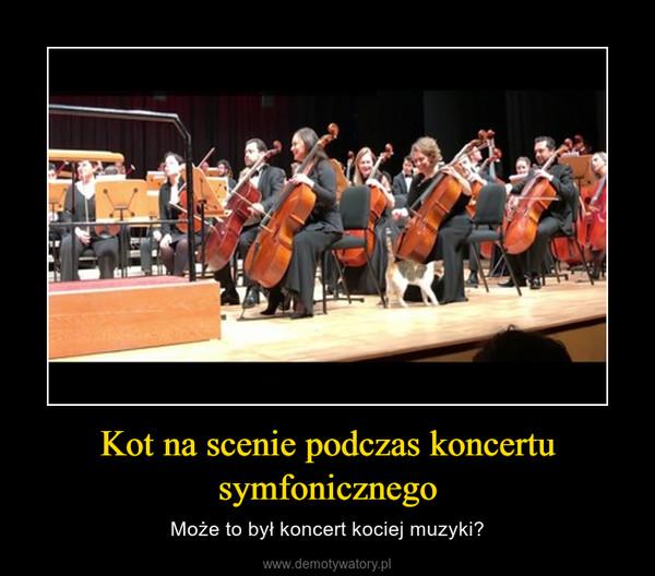 Kot na scenie podczas koncertu symfonicznego – Może to był koncert kociej muzyki?