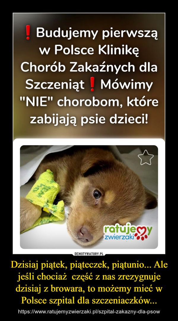 Dzisiaj piątek, piąteczek, piątunio... Ale jeśli chociaż  część z nas zrezygnuje dzisiaj z browara, to możemy mieć w Polsce szpital dla szczeniaczków... – https://www.ratujemyzwierzaki.pl/szpital-zakazny-dla-psow