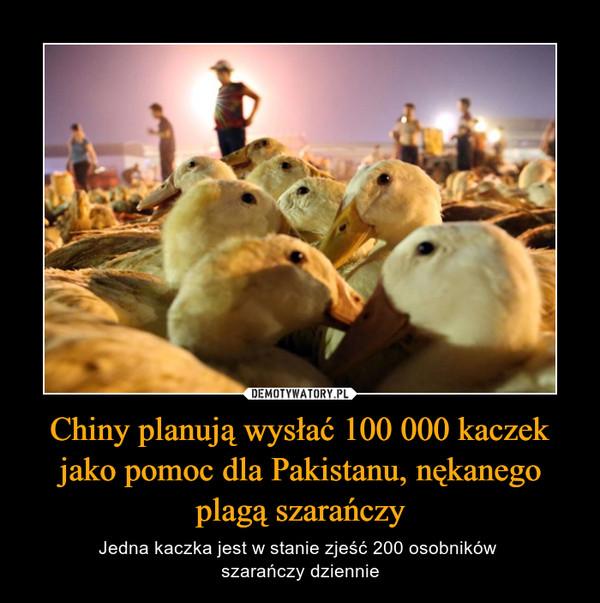 Chiny planują wysłać 100 000 kaczek jako pomoc dla Pakistanu, nękanego plagą szarańczy – Jedna kaczka jest w stanie zjeść 200 osobników szarańczy dziennie