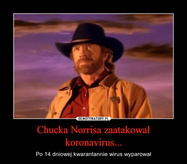 Chucka Norrisa zaatakował koronavirus... – Po 14 dniowej kwarantannie wirus wyparował