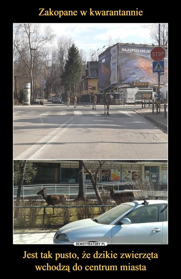 Jest tak pusto, że dzikie zwierzęta wchodzą do centrum miasta –