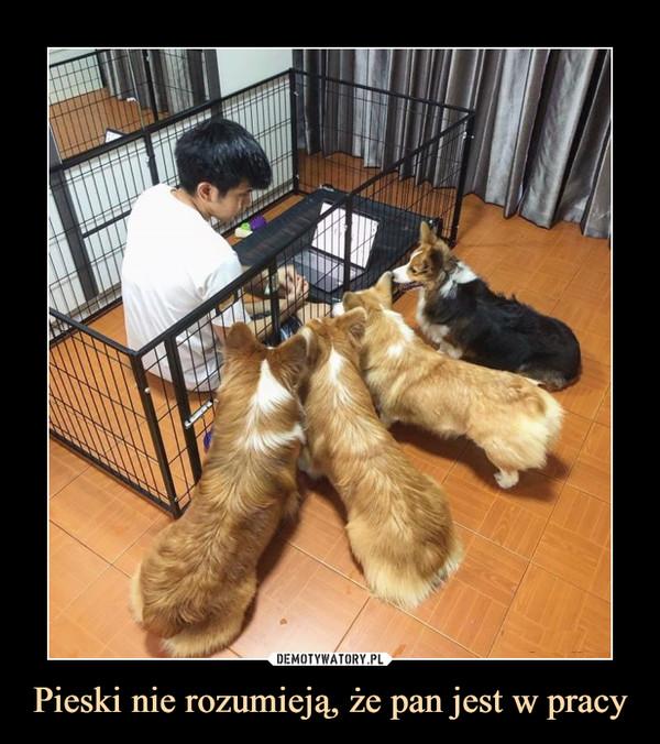Pieski nie rozumieją, że pan jest w pracy –