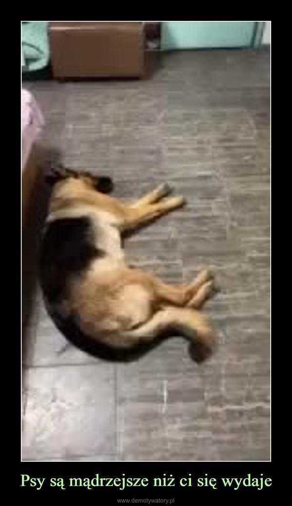 Psy są mądrzejsze niż ci się wydaje –