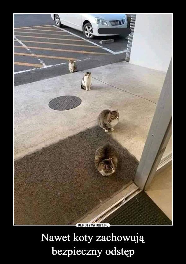 Nawet koty zachowująbezpieczny odstęp –